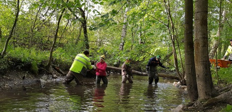 Helen organised voluntary working party to help threatened brown trout